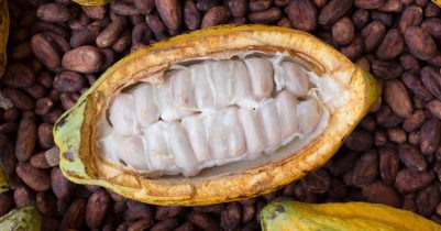 cacao-beans-health-benefits-FI-800x419